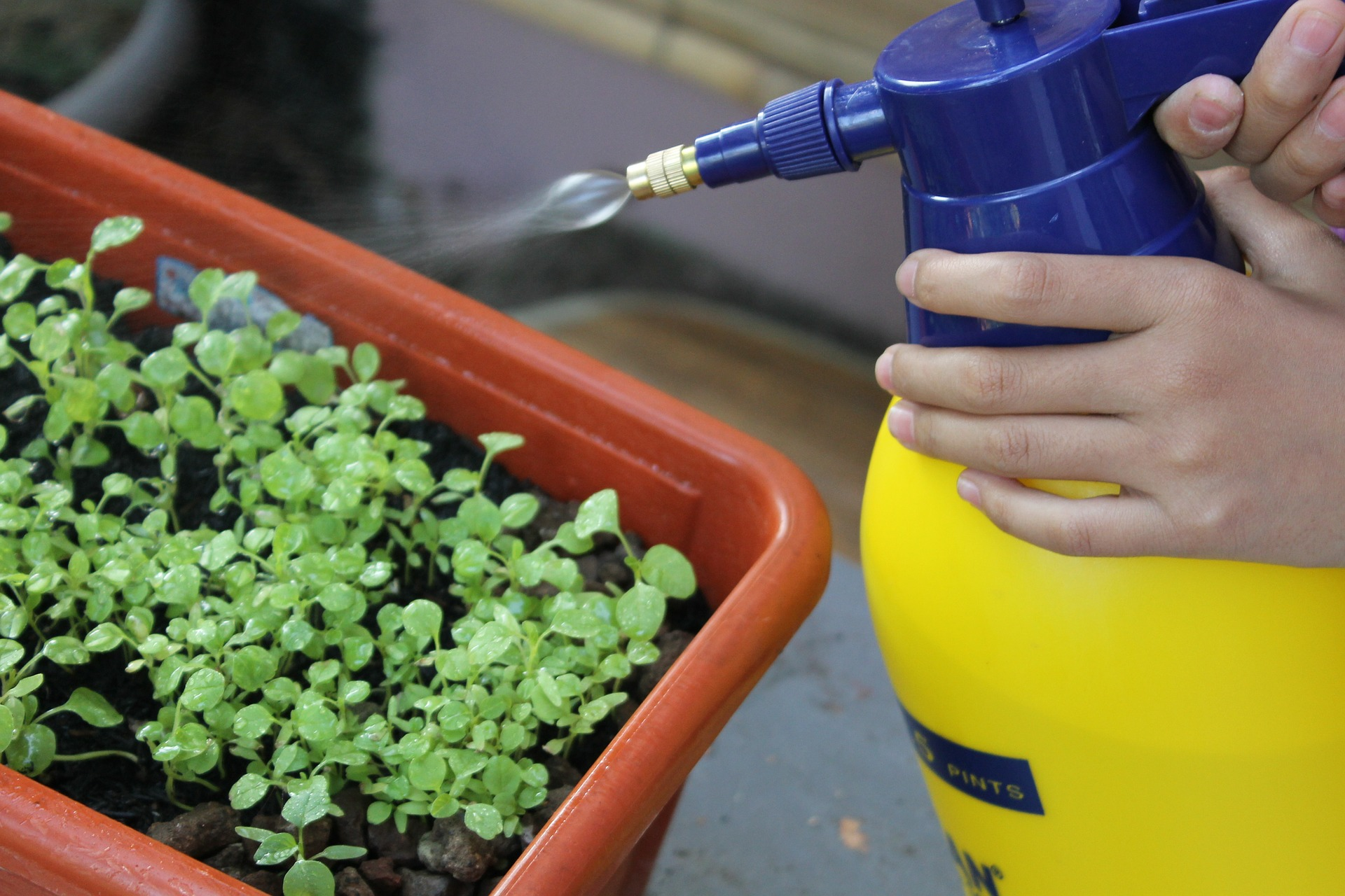 Why Foliar Feeding is the Best Way to Keep Plants Healthy