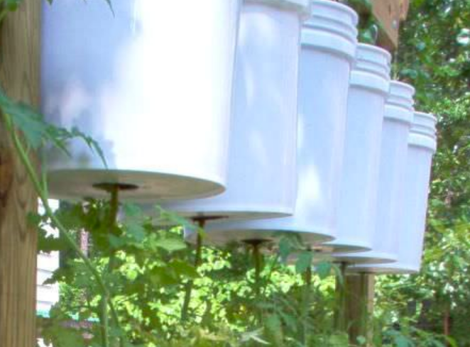 Upside-down tomato trellis rig