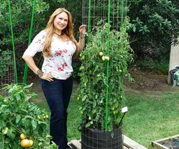 Tomato trellis tower