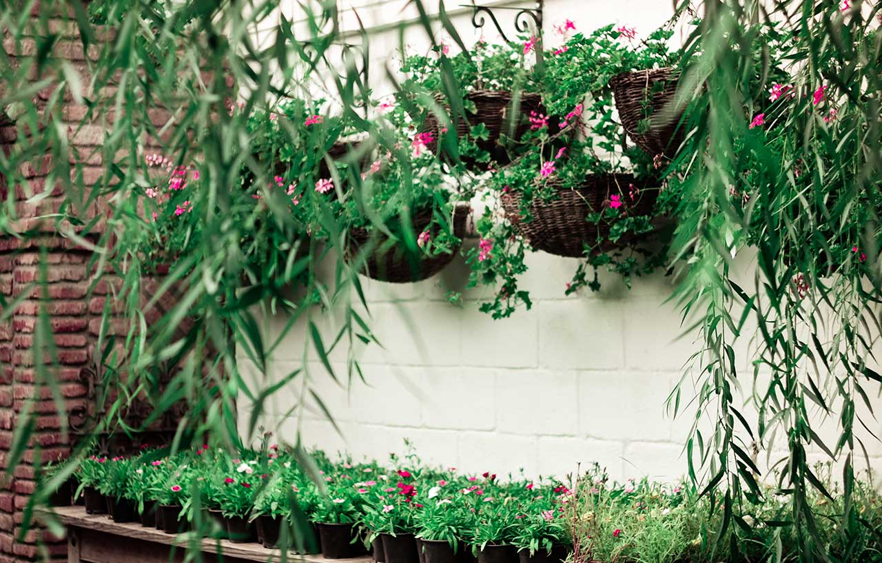 How to Create a Delightful Hanging Herb Garden for a Small Space