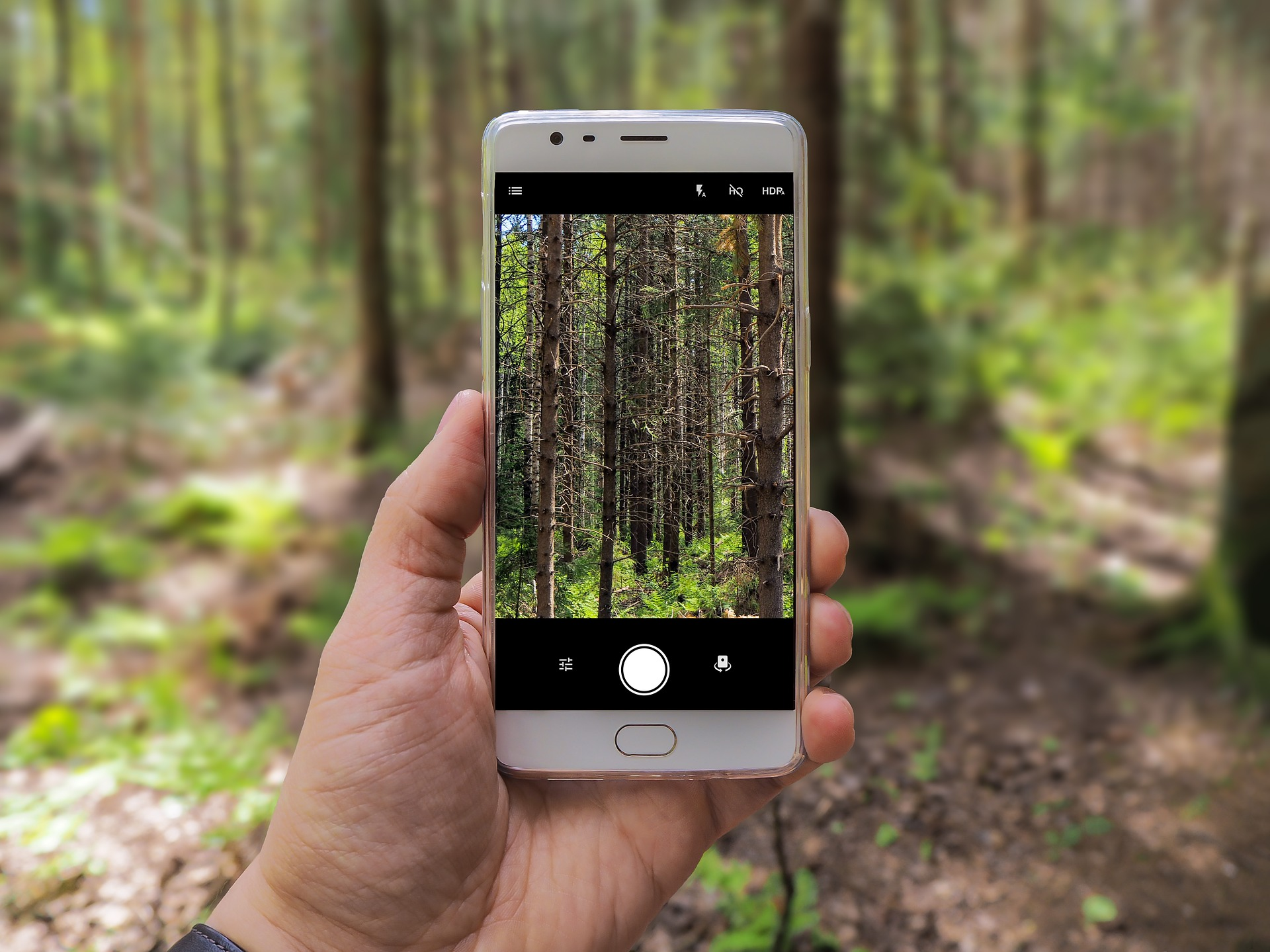 9 Helpful Plant Identification Apps for Budding Botanists