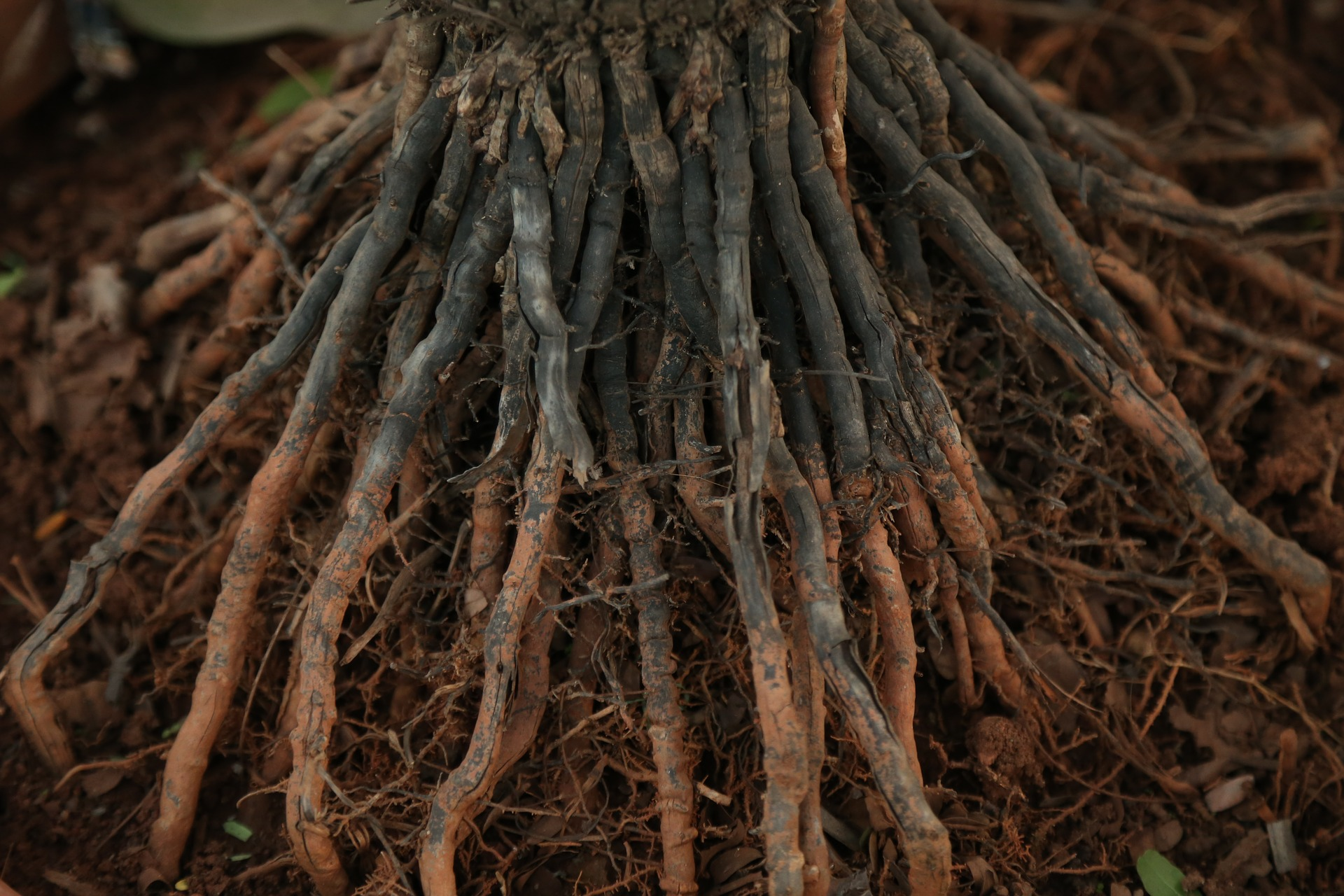 4 Pros and 3 Cons of Planting Bare Root Fruit Trees