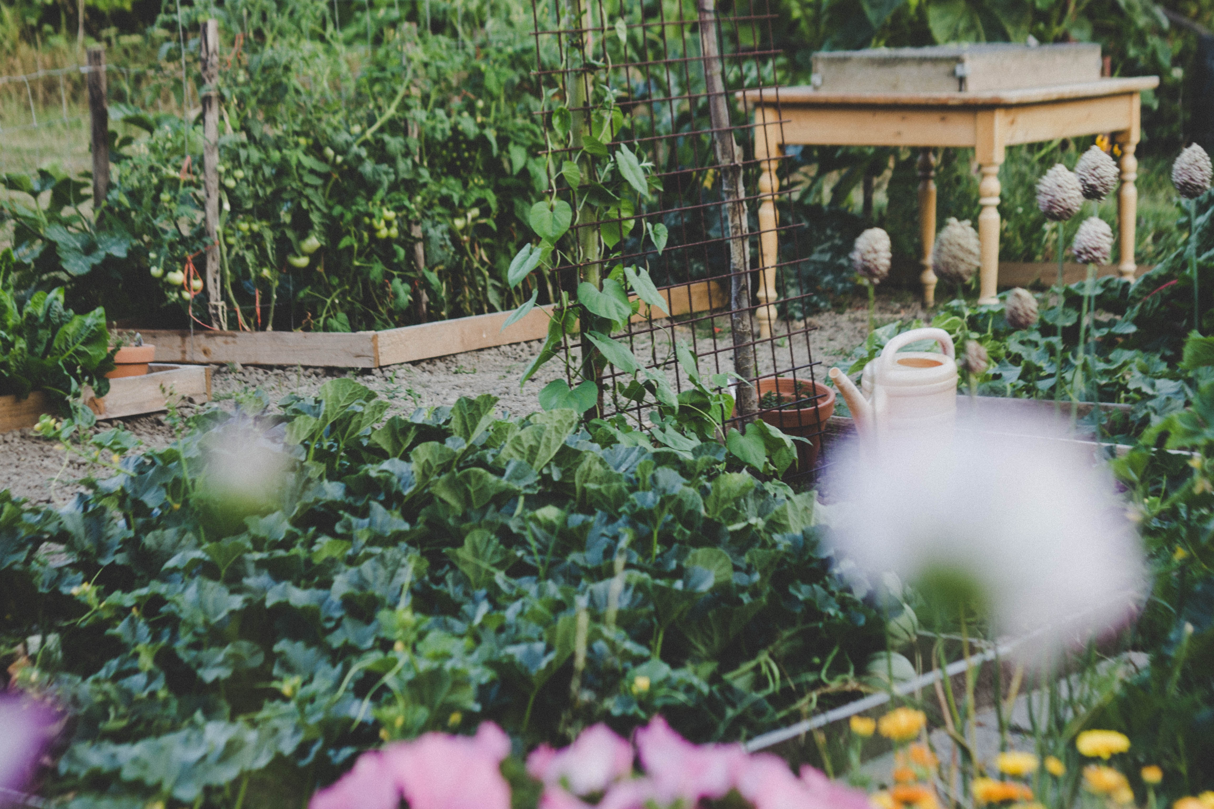 How to Plan a Prolific Family Food Garden (for 2, 4, or More)