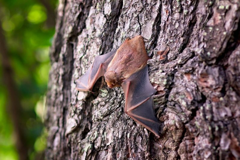 Attract wildlife like bats to your garden