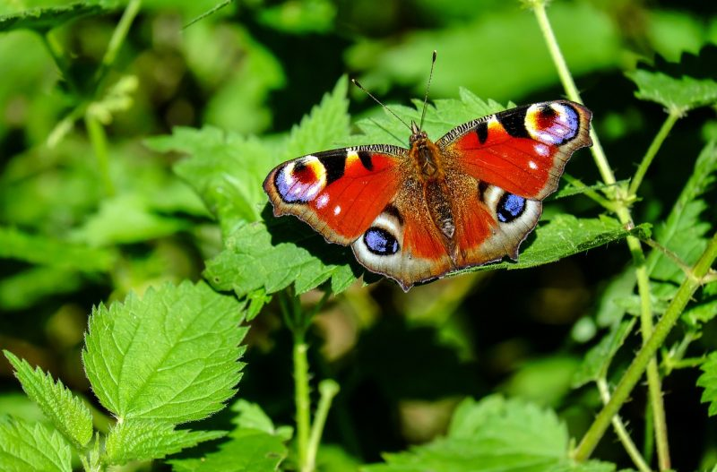 Attract wildlife to your garden
