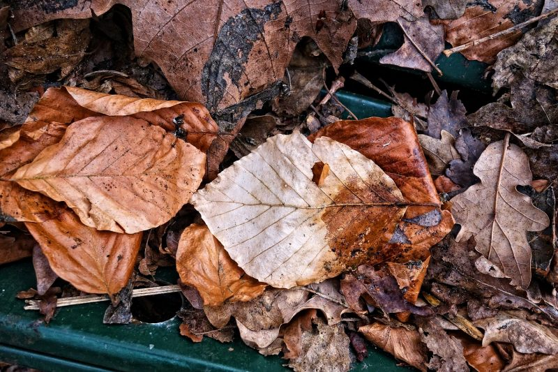 Add leafy matter to your homemade compost bin