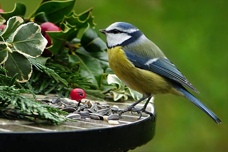 Take care of wild birds