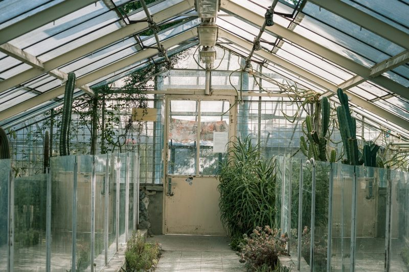 Greenhouse glasshouse