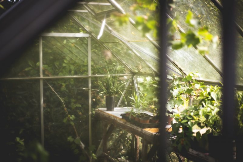 Benefits of a homemade greenhouse