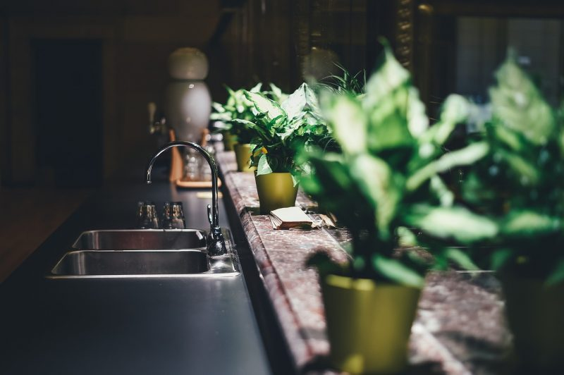 Windowsill kitchen plants