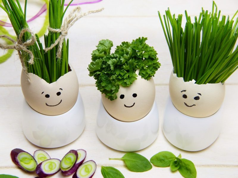 Parsley plant and other herbs