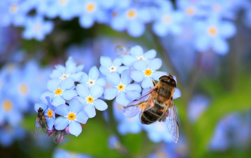 how to attract wildlife to your garden