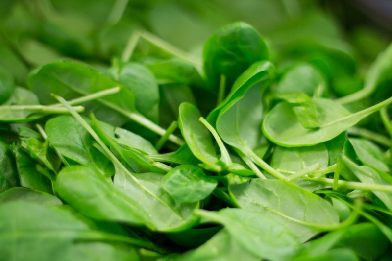 Heat-tolerant spinach plant varieties