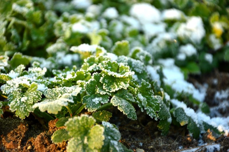 Compost in wintertime