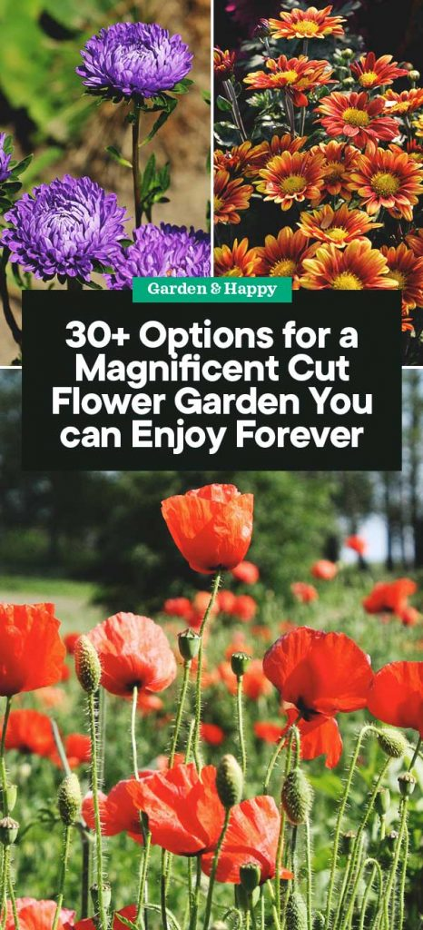 30 Options For A Magnificent Cut Flower Garden You Can Enjoy