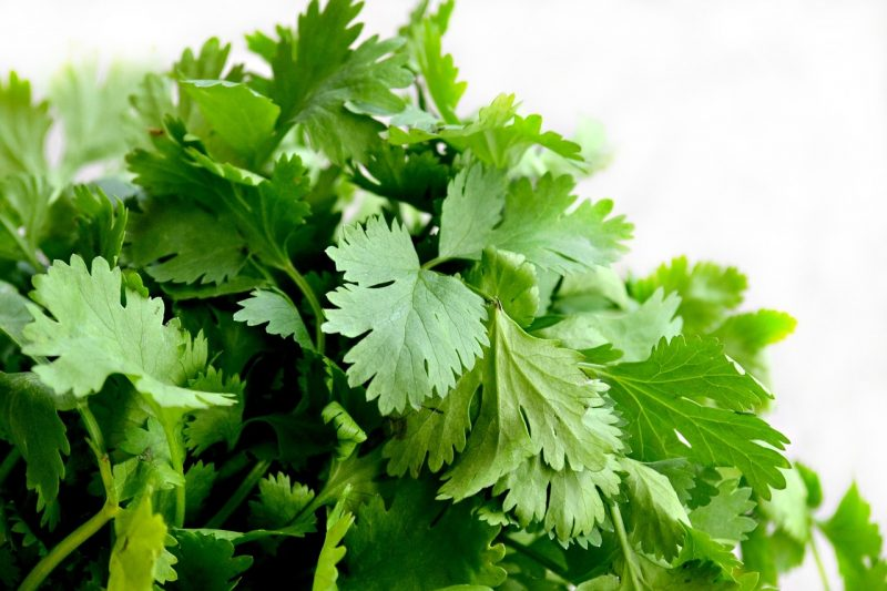 Types of Cilantro