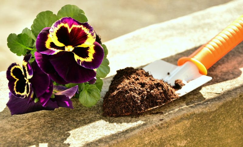 Soil for a cut flower garden