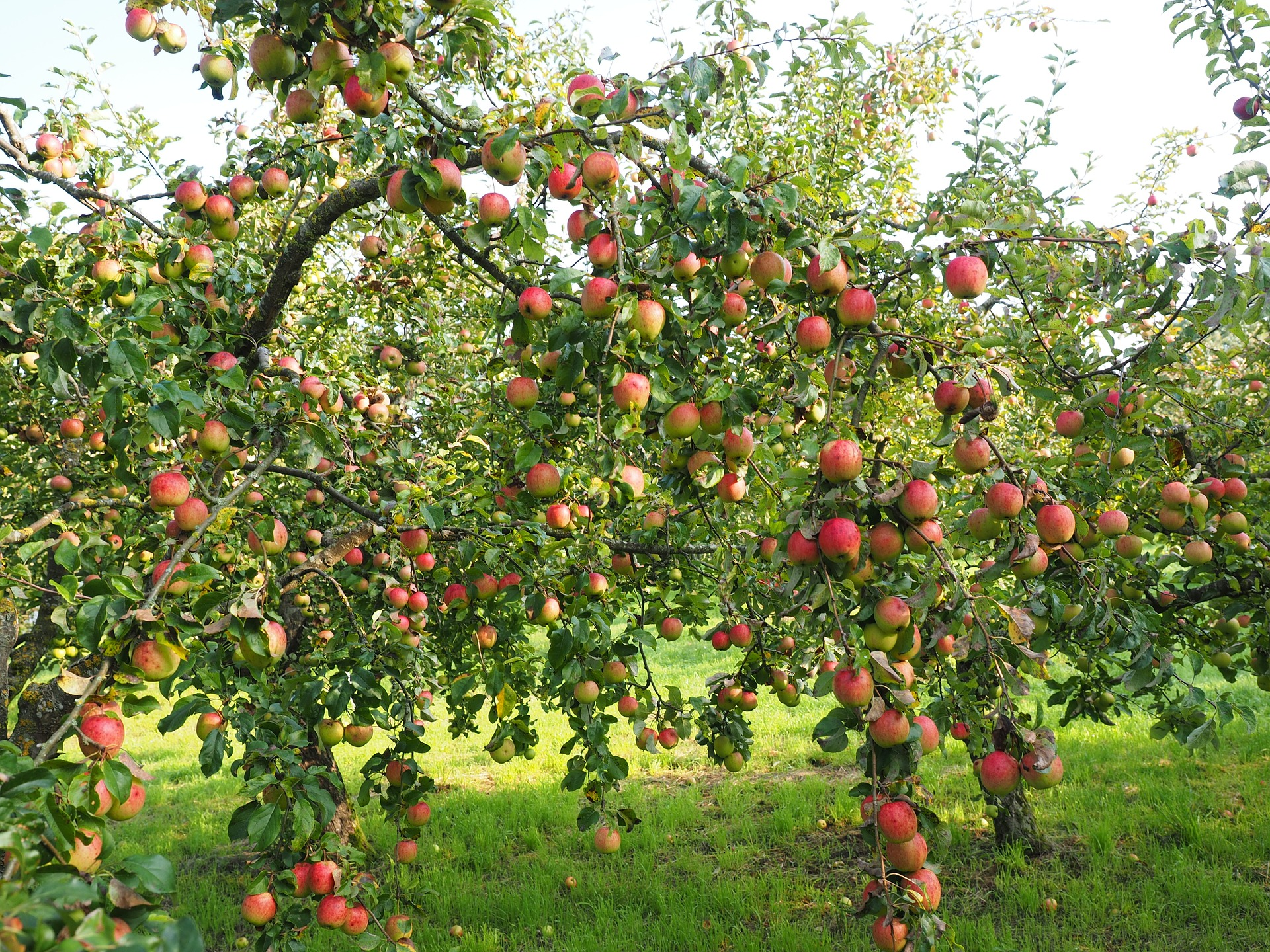 A Guide to Planting a Wonderful Permaculture Fruit Tree Guild