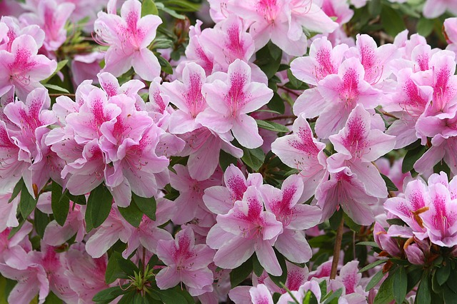 19 Gorgeous Evergreen Shrubs that Add Color to Your Garden Year Round