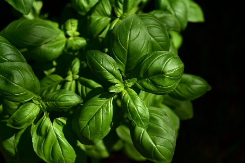 Basil compliments many French vegetables
