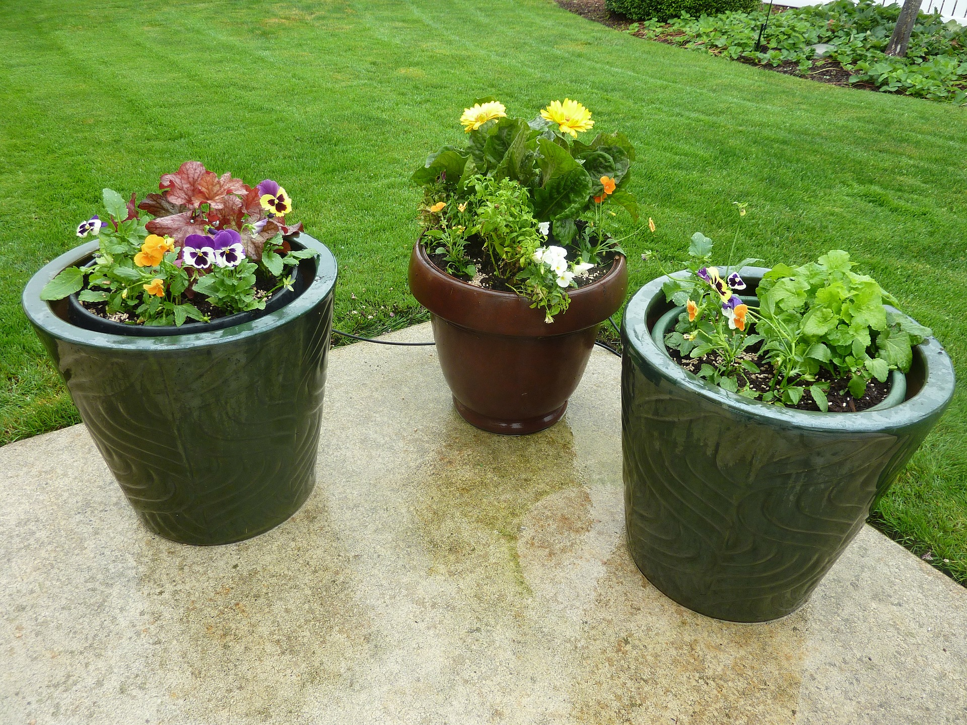 11 Frustrating Container Gardening Challenges and How to Solve Them