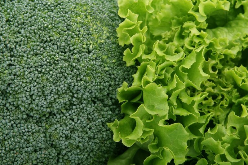 Brassicas are prone to plant bolting