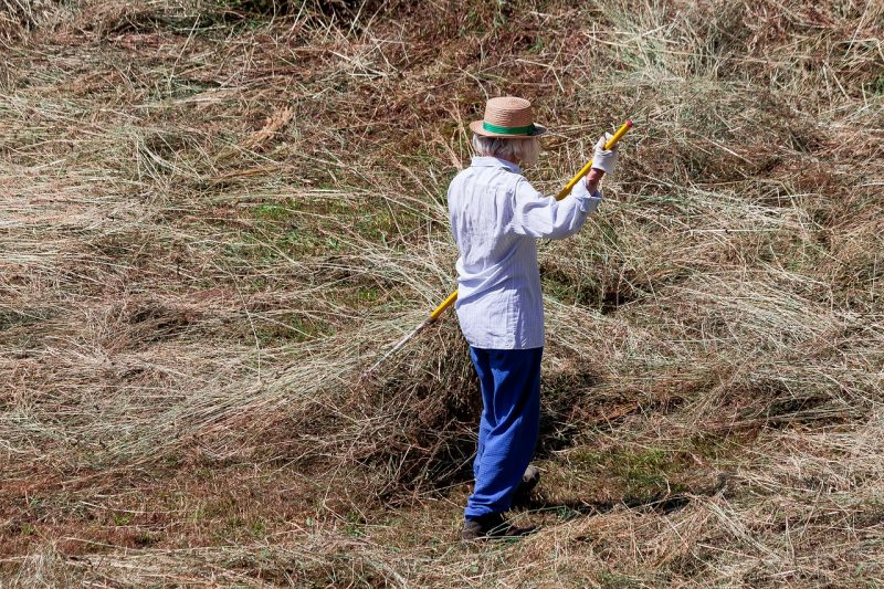 Straw and hay mulch