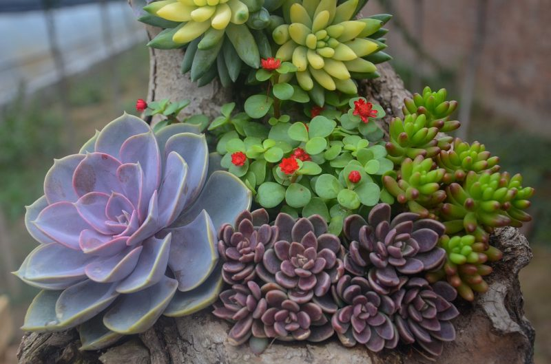 Succulents are ideal tiny house plants