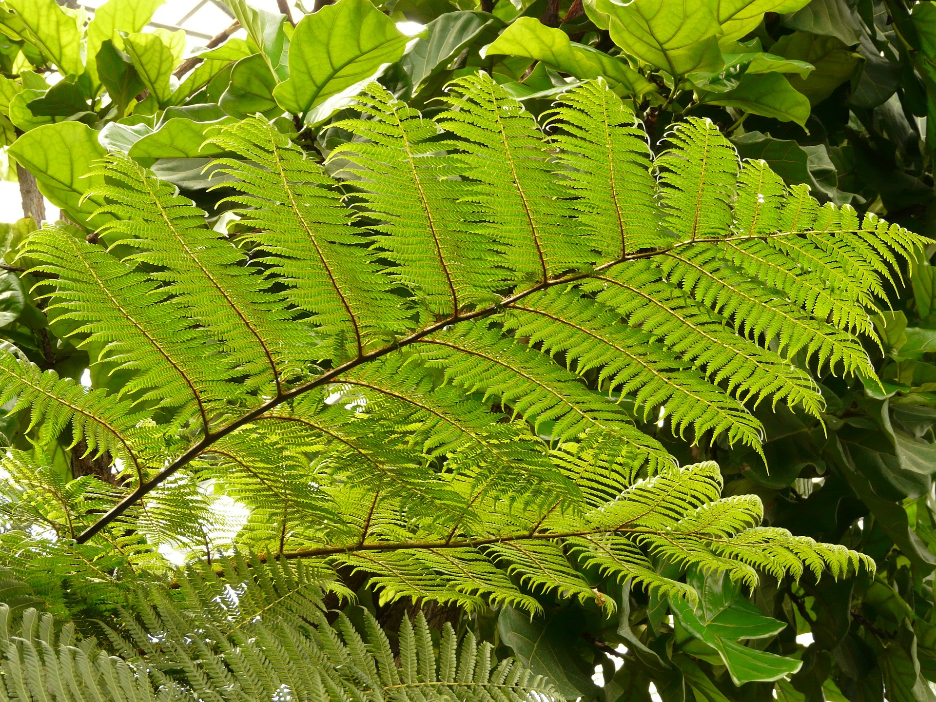 Top 10 Amazing Hardy Types of Ferns for Growing Indoors or Outside