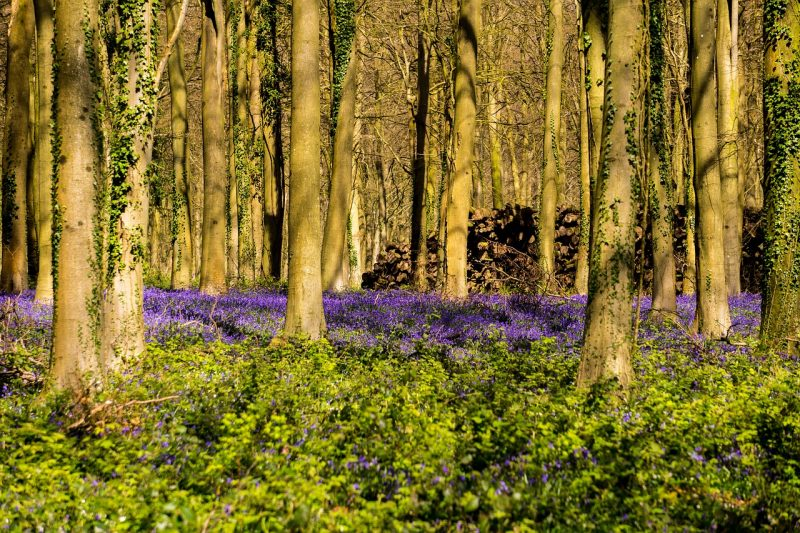 Trees and shrubs for a woodland garden