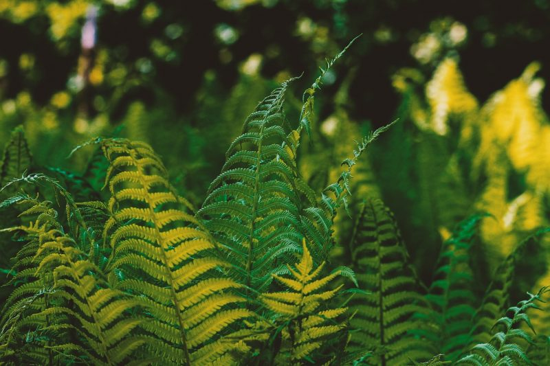 Ferns are perfect for a tropical garden