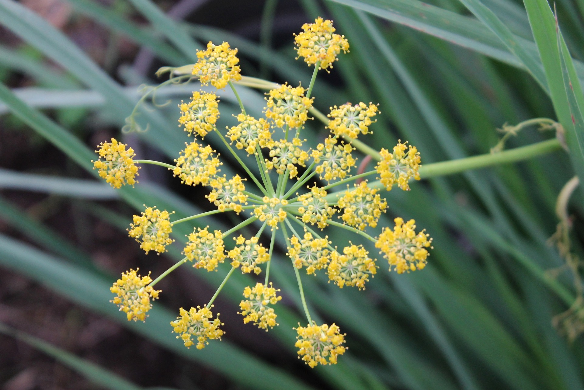 The Facts About When To Use Fennel Seeds Uncovered
