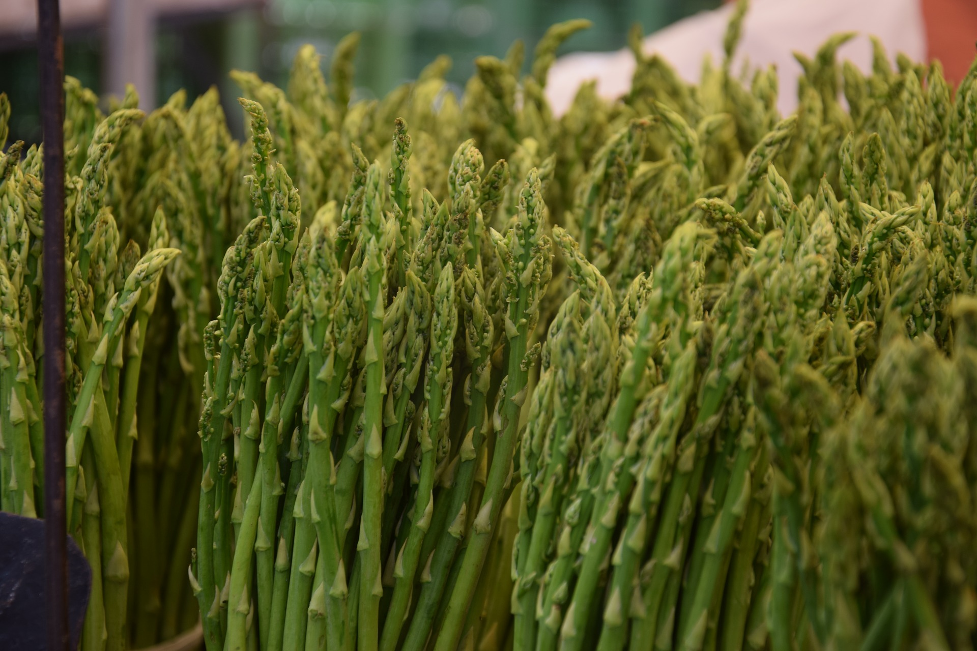 How to Grow Asparagus at Home for Delightful Perennial Harvests