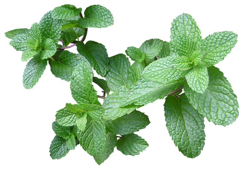 Mint for homemade cleaners