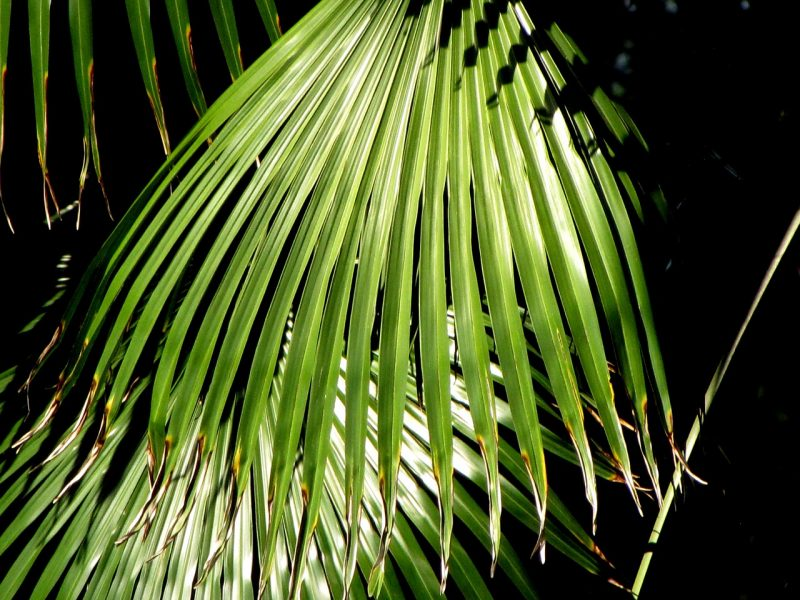 Palm plants for a tropical garden