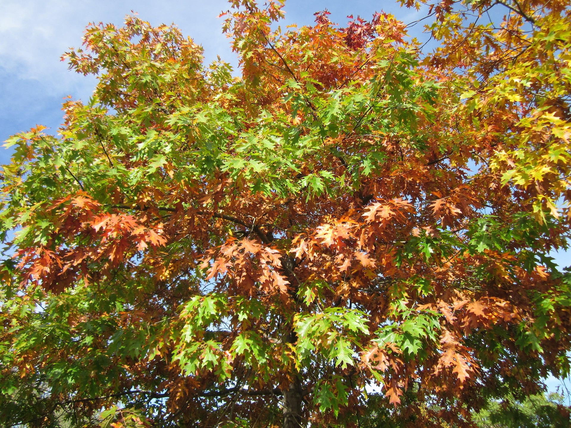 17 of the Most Popular Fast Growing Shade Trees for Your Yard