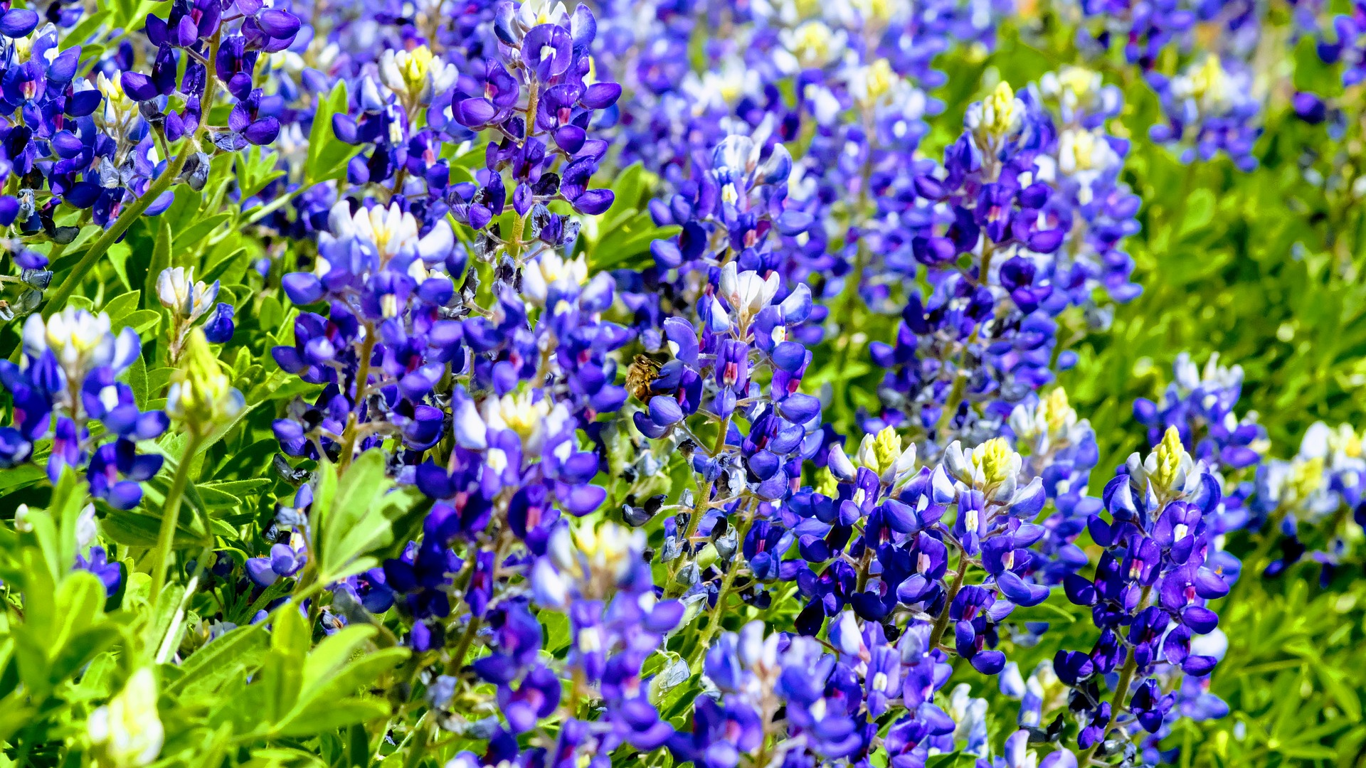 10 Gorgeous Blue Wildflowers to Surround Your Garden With