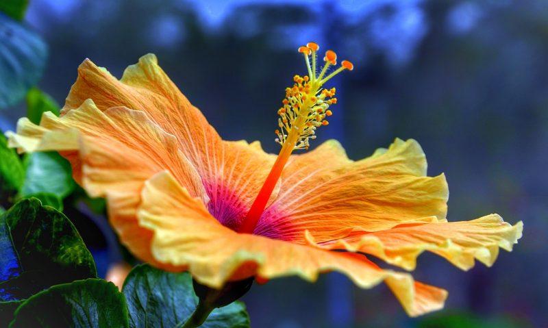 Tropical garden flowers