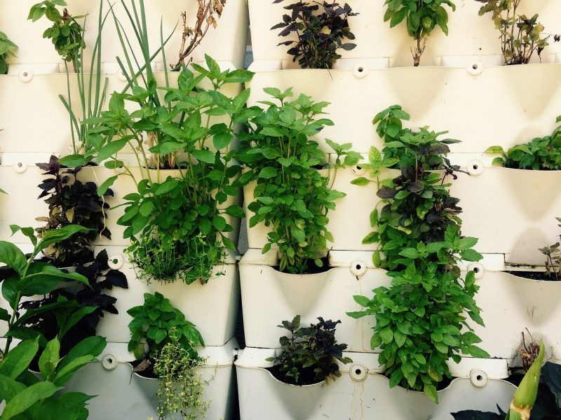 Herbs are perfect tiny house plants