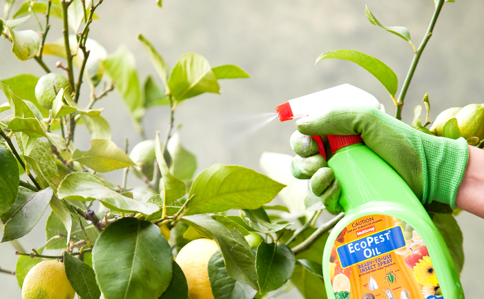 Organic-Pest-Spray