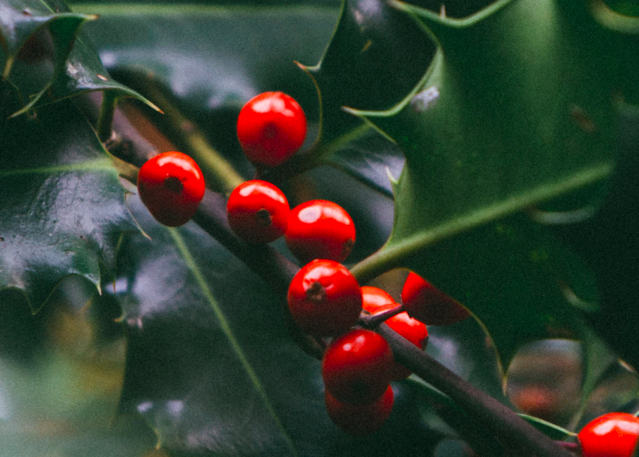 24 Gorgeous Christmas Plants that Aren't Poinsettias