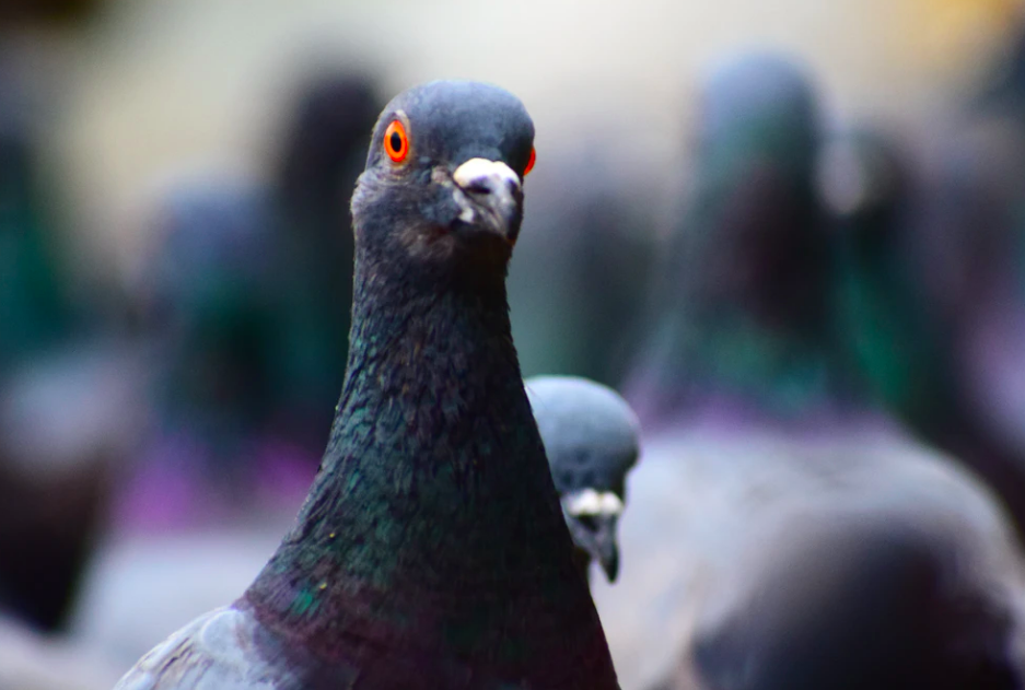 How to Get Rid of Pigeons with 7 Humane Deterrent Methods