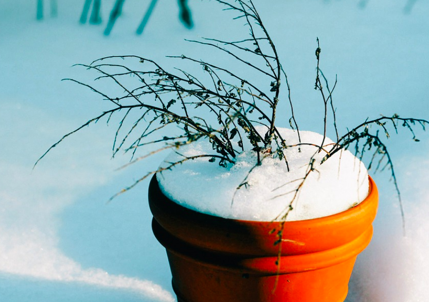 How to Keep Your Patio Plants Safe Outside Over the Winter