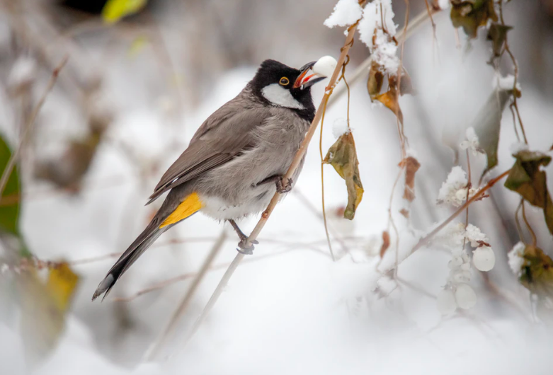19 of the Best and Most Nourishing Winter Plants for Birds