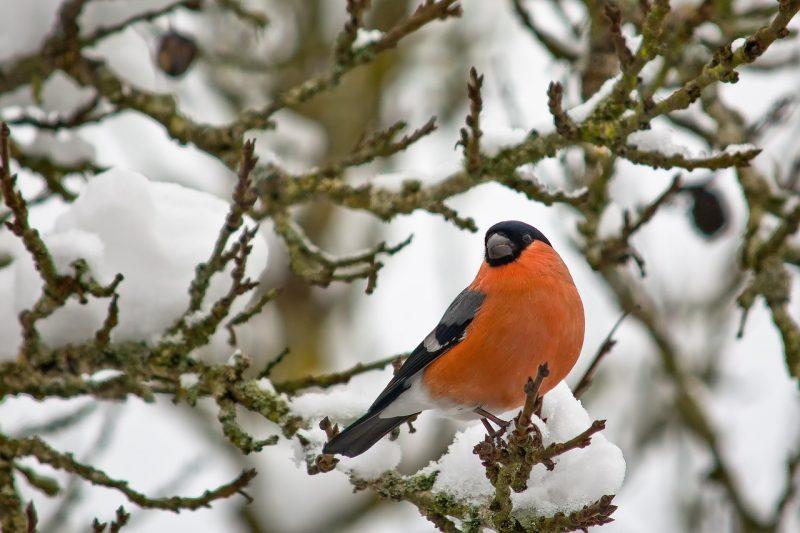 Winter plants for birds