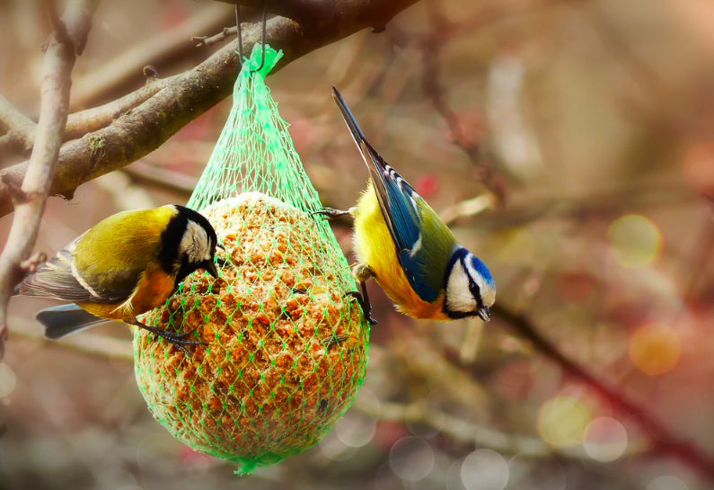 How to Make a DIY Suet Bird Feeder to Help Hungry Birds in Wintertime