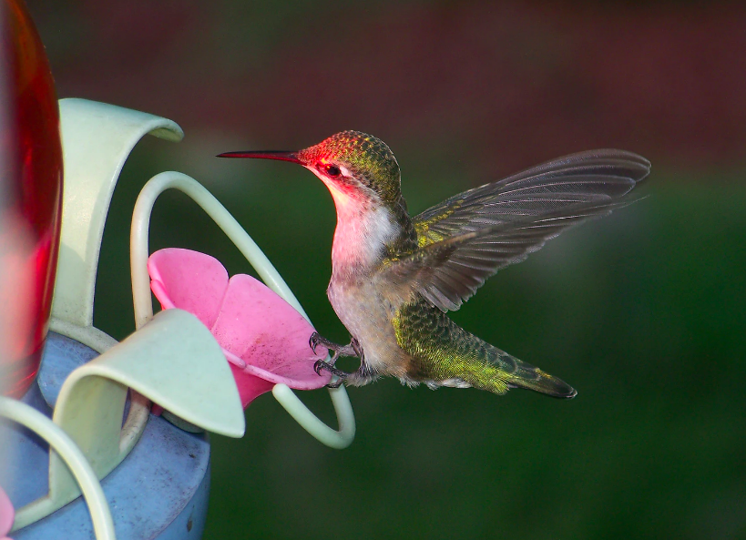 9 Easy and Beautiful DIY Hummingbird Feeder Gift Ideas