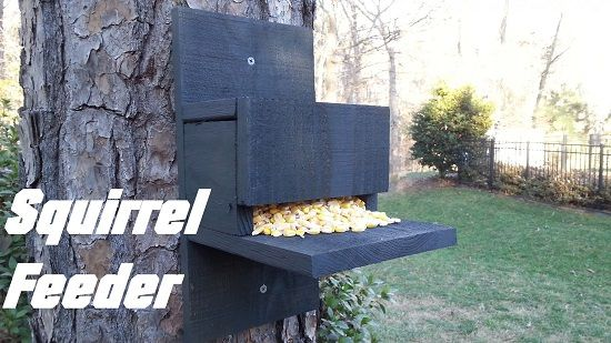 Squirrel feeder diy
